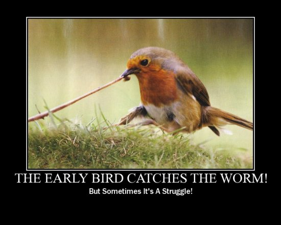 funny motivation bird robin