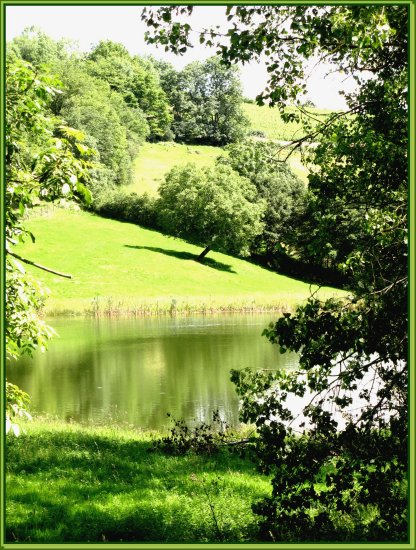 pond water summer France nature field tree grass green liveearth