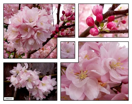 Spring bloom tree ornamental flower bud mosaic