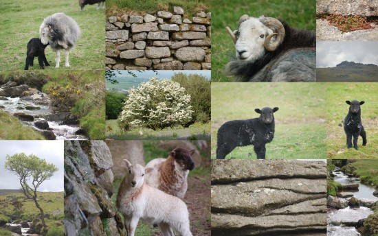 collagefriday dartmoor