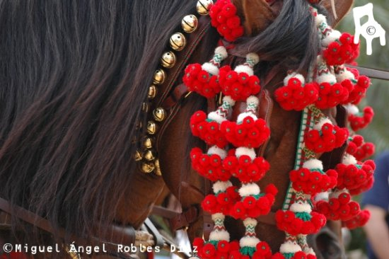HORSES RED