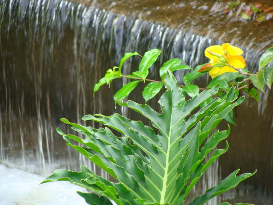 waterfall yellow flower water drop