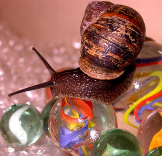 marble marbles snail