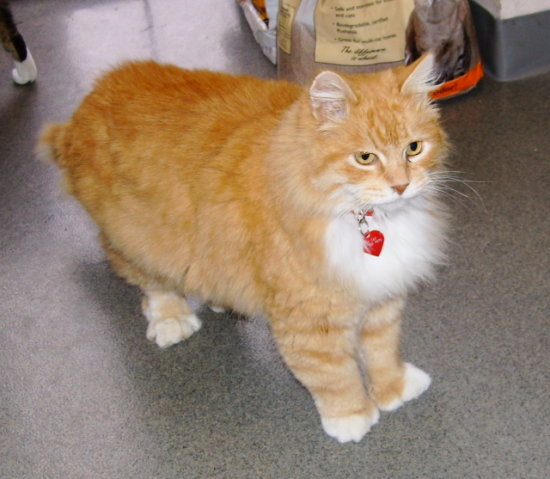 Ben (up for adoption)  Check out his feet, he's a polydactyl (6 toes or more on each foot)!
