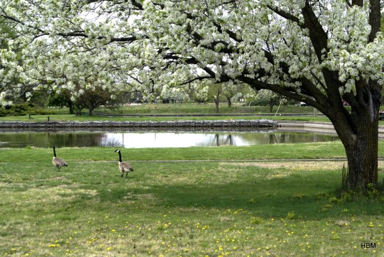 Spring Trees Parks