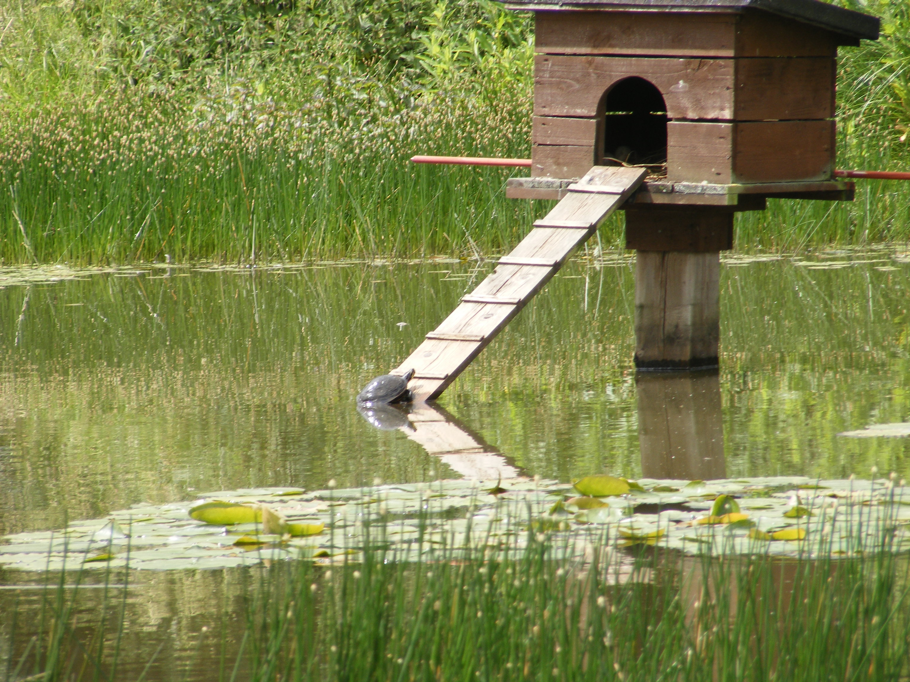 Pin duck house pond pictures on pinterest for House duck