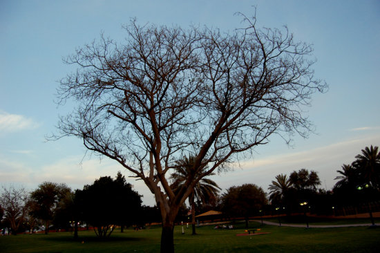 evening snap Abudhabi Park