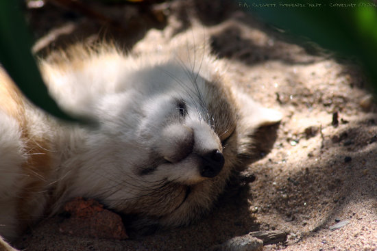 [Awwwe, how cute!]  ...errr wait a minute, are those his teeth? *yikes*   - taking a nap in ...