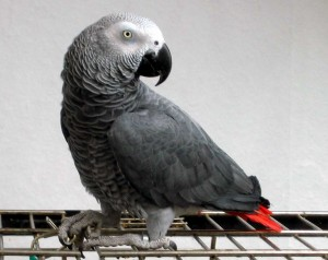 facts about birds parrot facts