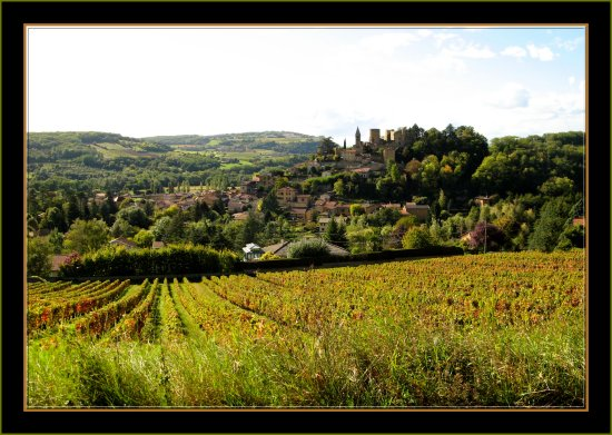village France Beaujolais Wineyard landscape countryside nature