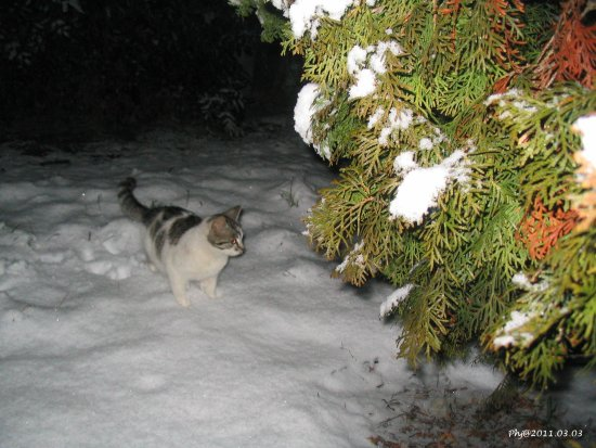 Winter spring 2011 March 3 janos Snow cat