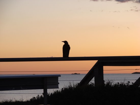 Sunset bird crow silhouette Western Australia littleollie