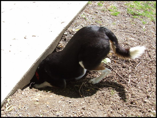 dog dig tunnel rabbit hole