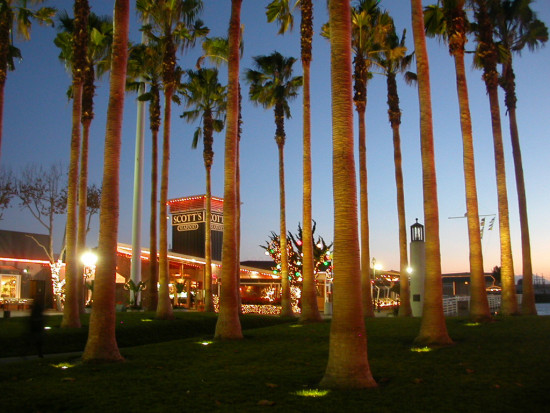 oakland holidayfph palmtrees lights jacklondonsquare sunset jlsquarefph