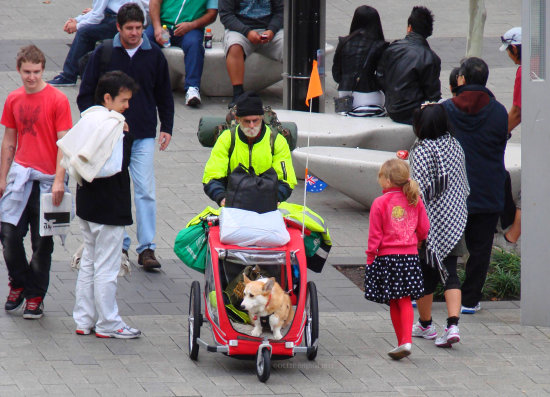 traveller dog man pram city centre perth littleollie