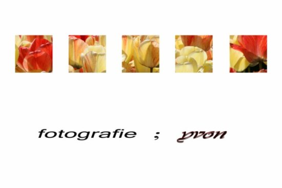 spring collage tulips holland