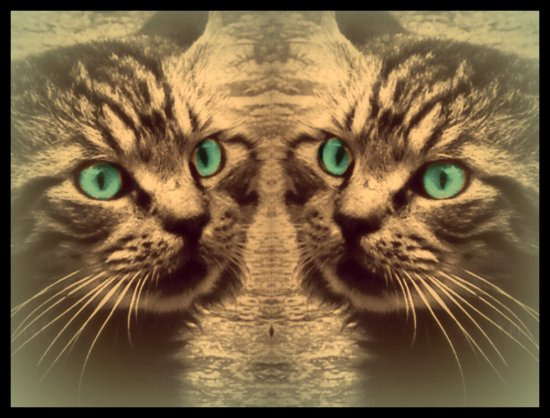 cats digitalartclub