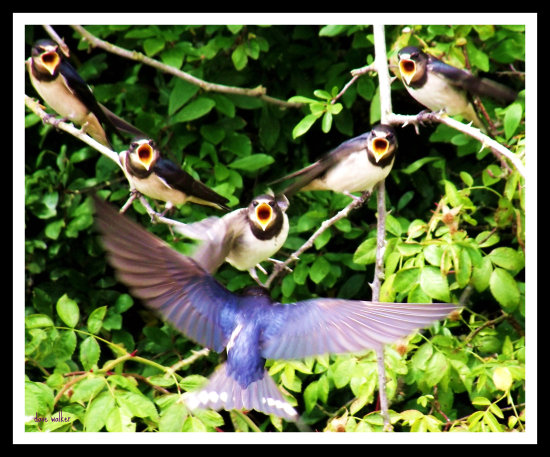 hungry housemartins my2011bestshotfriday