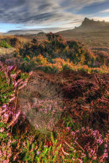 HDR Landscape Dawn Heather