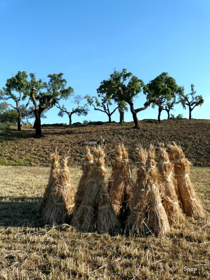Stacks of Hay and Cork Trees Portugal