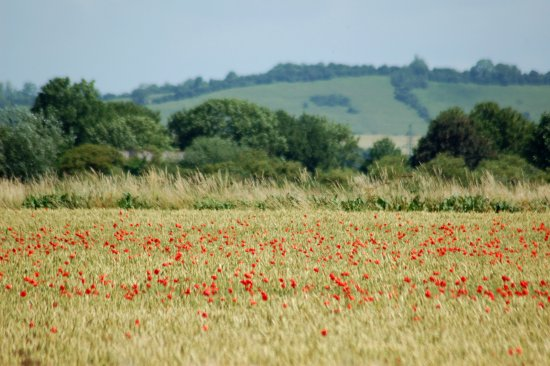 Poppy field leading to distant hill of dreams