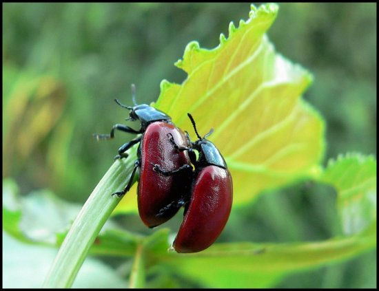 insect bug beetle france
