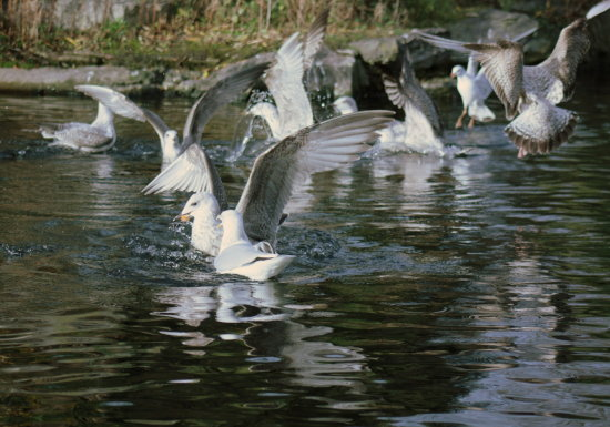 birds nature seagulls pigeons water park landscape people