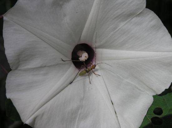 Bind weed and bug 1