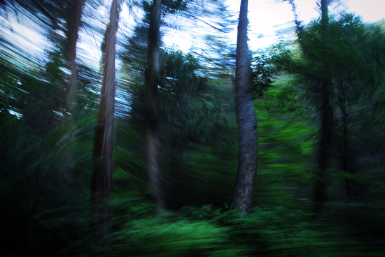 yosemite pine tree motion blur panning