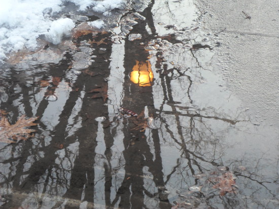 week 8 reflection of a latern trees reflected in water