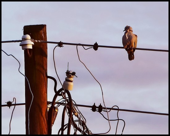 dove in a very windy day ( notice the feathers ) and moooore wires in sunset :-)