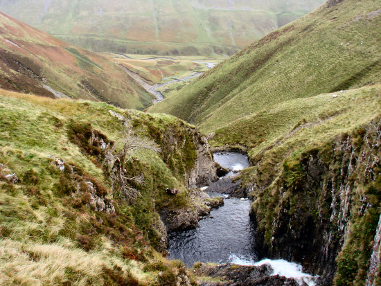 Grey Mares Tail   ( Moffat )