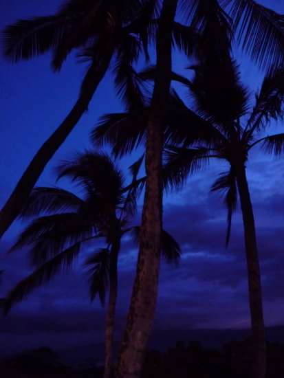 deep blue sunset and palm trees