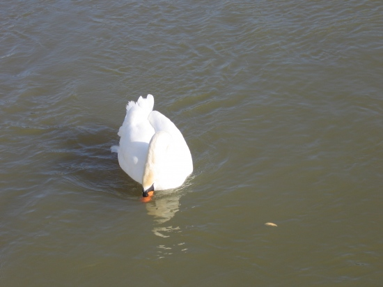 I'm actually in love with the beauty and grace of swans. They are the ones which look most like a...