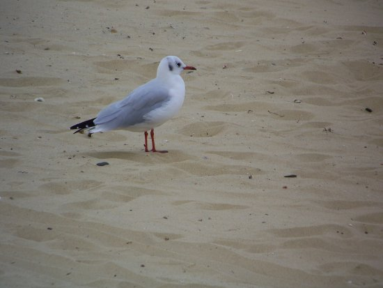 seagull beach hot day cool sand brid