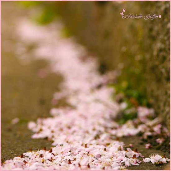 blossoms ground kerb change seasons pink flowers