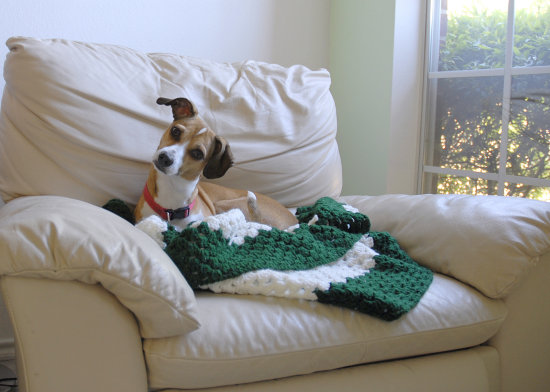 hi. i'm puppy dog. my people have a blog where they put their photos but they weren't devoting en...