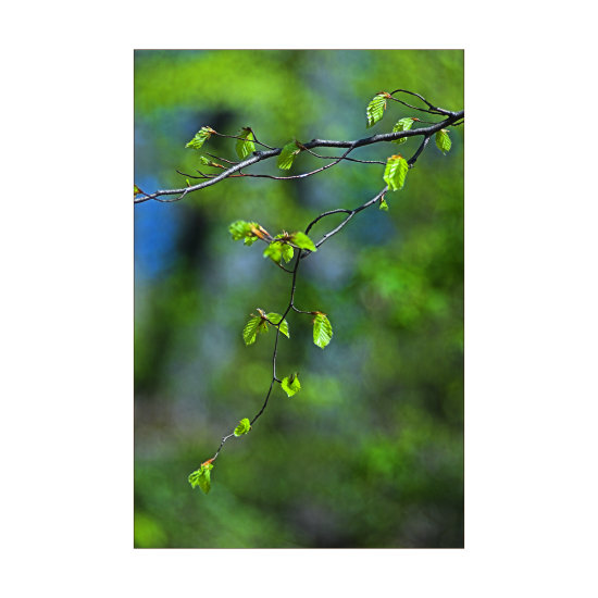 spring leaves tree forest nature macro Budapest Hungary