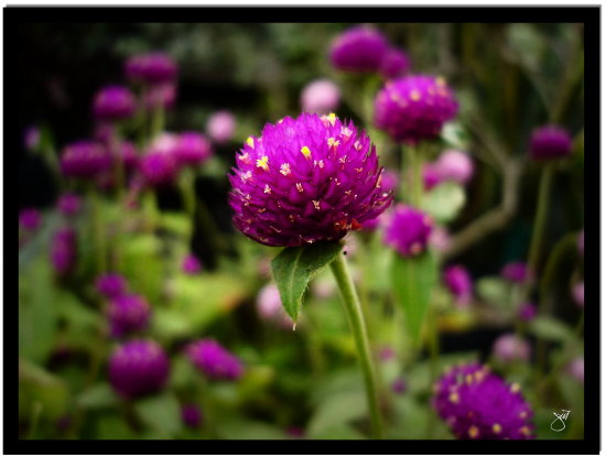 flower purple nature