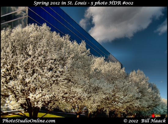 stlouis missouri usa spring color tree flowers vibrant hdr 031812