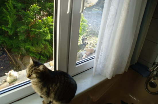 cat inside and out side .. and they be rivals...they fight for territory....smile