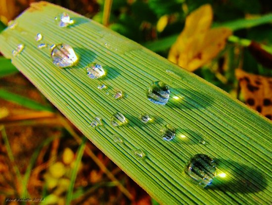 Grass Beach Water Drops Skalderviken Skane Sweden 2012 October
