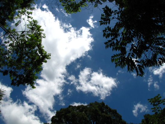 nature tree sky mendanha brazil