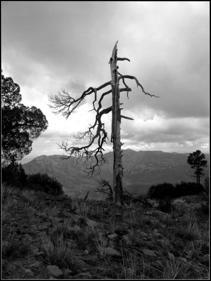 Dead tree and approaching strom