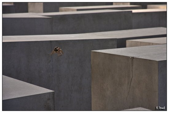berlin bird Holocaust Memorial