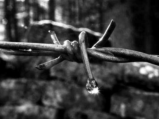 barbed wire raindrop dew bw macro challenge84