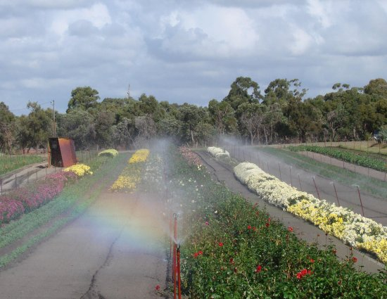 rainbow sprinkler flower farm perth littleollie