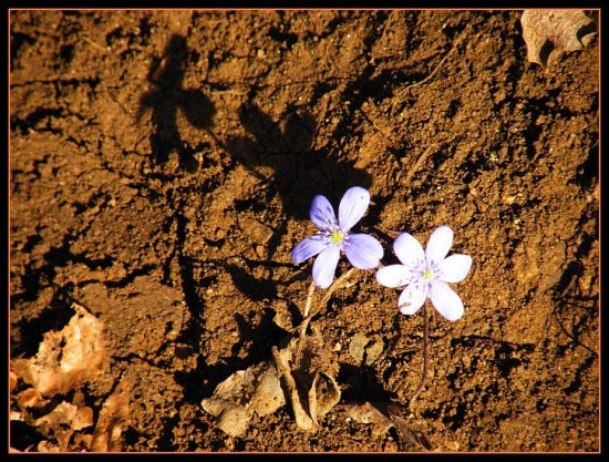 From the dust and mud life is rebounding