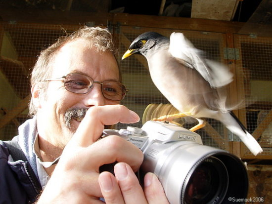 man photographer bird miner camera