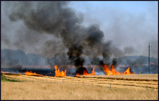 hotfriday fire field crops flame smoke burning orange black hot